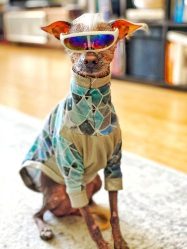 Custom Made to Fit Dog Shirt